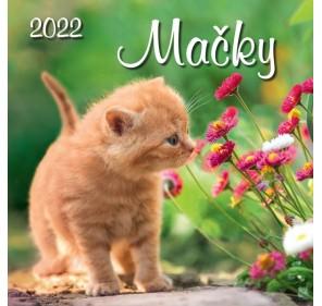Mačky 2022
